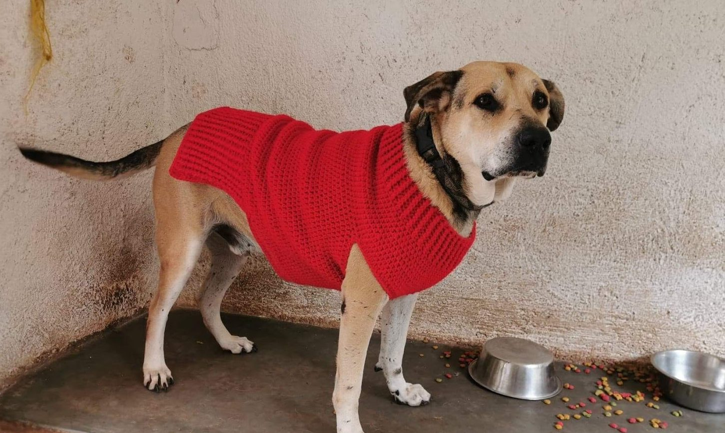The Doggy Sweater Size Extra Large Crochet It Creations